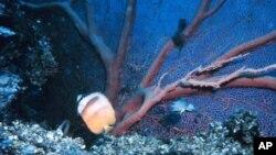 Σχόλιο: Παγκόσμια Ημέρα Ωκεανών