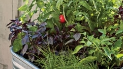New Ways to Grow Crops