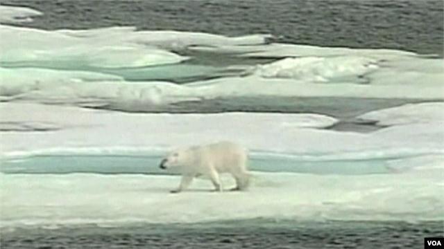 Les avertissements se multiplient sur la fonte de la banquise de l'Arctique