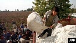 Vatandagi manzara: Toshkentda hosilni pullashga hozirlik qizg'in