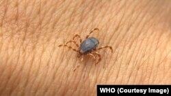 ناقل این ویروس به انسان یک نوع کنه است که در مکانهای نمناک رشد می کند