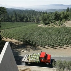A truck carries grapes from the Cae Winery in California's Napa Valley