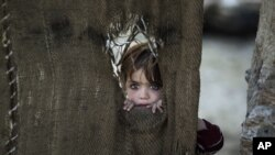 1月28日巴基斯坦部落地区一个流离失所家庭的孩子从门帘的破洞向外张望