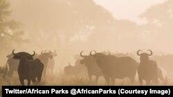 Le parc national de Zakouma au Tchad, 13 septembre 2017. (Twitter/African Parks @AfricanParks)