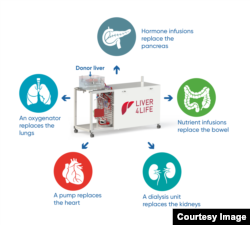 The perfusion machine replaces the functions of various organs in order to keep the donor liver alive outside of the body. (Image: University Hospital Zurich/beamue)