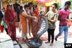 "Umat Hindu menuangkan susu di atas patung ular Cobra dalam festival ""Nag Panchami"" di sebuah kuil di Amritsar, 13 Agustus 2021. (Foto: NARINDER NANU / AFP )"