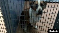 El perro está en cuarentena y sus dueños aún no han decidido si será sacrificado.