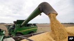 資料照:印第安納州布朗斯堡收穫的大豆。(2018年9月21日)