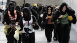 Competitors take part in the Great Gorilla Run in central London every year to raise money for the Dian Fossey Gorilla Fund