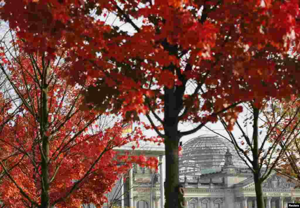 Reichstag, atau gedung majelis rendah parlemenJerman , terlihat di antara daun-daun berwarna merah saatmusim gugur di Berlin.