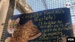 Agroflori, un refugio para especies silvestres y en peligro de extinción. [Foto VOA/Fabiola Chambi].