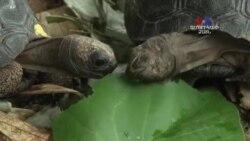 ԲԱՐԻ ԼՈՒՅՍ. Ստելլա Գրիգորյան՝ ամենաերկարակյաց կրիաները վտանգված են