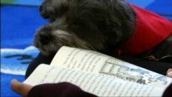 В нью-йоркской школе собаки помогают детям учить английский язык