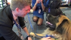 Stress-relieving Dogs Ease Minds of Travelers, Pilots at Busy Airports