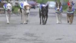 سڑکوں کو محفوظ رکھنے والے آوارہ کتے