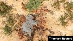 یک فیل مرده در دلتای اکاوانگو، بوتسوانا