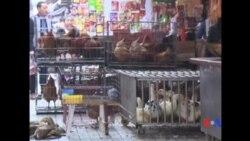 2017-02-14 美國之音視頻新聞: 中國四川發現兩宗H7N9禽流感病例