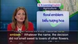 Anh ngữ đặc biệt: Growing Roses (VOA-Ag)