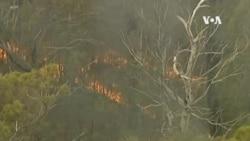 澳洲警告山火有擴大危險 多個城市取消除夕煙花匯演