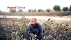 O'zbek dehqonlari hayoti, paxta va paxtachilik - Uzbek farmers, cotton production/Russell Zanca