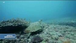 Plastik Atıklar Su Kaplumbağalarını Öldürüyor