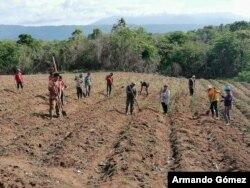 Doña Chica y sus compañeros campesinos ayudaron a reparar una casa de costarricenses afectada por los fuertes vientos.