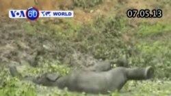 Voi con được cứu từ dưới hào ở Ấn Độ (VOA60)