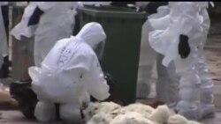 2014-01-28 美國之音視頻新聞: 香港撲殺上萬雞隻 防止禽流感擴散