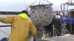 Բրէքզիթի արդյունքում դժգոհ են բրիտանացի ձկնորսները