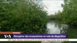 Restauration de la Mangrove au Sénégal : le combat d'un écologiste