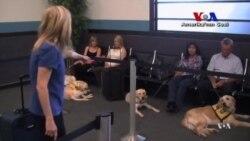 Rehber Köpeklere Ucuz Stres Kursu