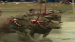 تھالی لینڈ میں بھیسنوں کی دوڑ