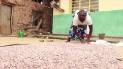 Iron-Fortified Beans Winning Customers in Rwanda, Uganda