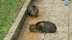 Kadıköy'de Sokak Kedileri Şenliği
