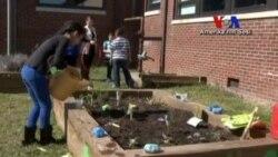 Amerika'da Çocuklar Bahçıvanlık Öğreniyor