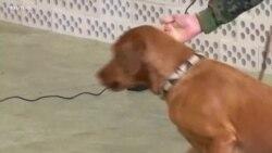Иновативна тактика: Германската армија користи кучиња за детекција на коронавирусот