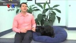پیوندهای بیوشیمی میان انسان و سگ