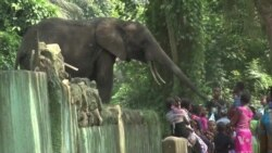 Abidjan Zoo Slowly Recovering After Years in Crisis