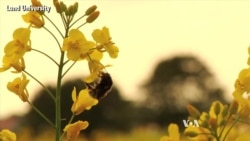 Study: Insecticide Damaging Wild Bee Populations