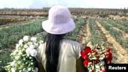 Peruvian Gisela Huamani, 11, carries flowers during a harvest at a field in a shantytown in Lima, May 26, 2005.
