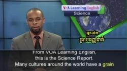 Will Ethiopia's Teff Be the Next Super Grain?