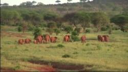 Трехдневный саммит по борьбе с браконьерством в Кении