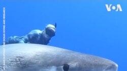 Chạm trán cá mập trắng khổng lồ