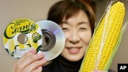DVD disks made of vegetable-based plastic by Victor Company of Japan (JVC), in Tokyo (file)