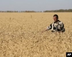 Drought in the Black Sea region cut Russia's wheat harvest by a third in 2010. A subsequent ban on wheat exports drove prices up.