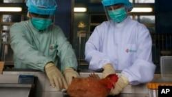 医护人员正从中国大陆家禽身上提取样本。
