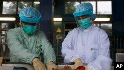 檢驗人員檢查雞群是否感染H7N9禽流感病毒