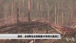 报告:全球野生生物数量40年间大量消亡