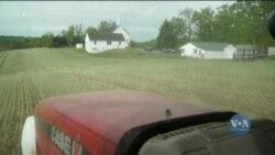 Чому американські фермери все частіше починають засаджувати свої землі несезонними злаками? Відео