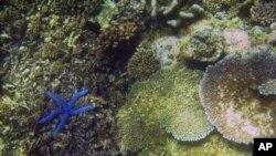 Samudera adalah salah satu sumber obat. Setidaknya ada 26 obat berasal dari organisme laut yang kini beredar di pasaran atau sedang dalam proses pembuatan (foto: dok.).